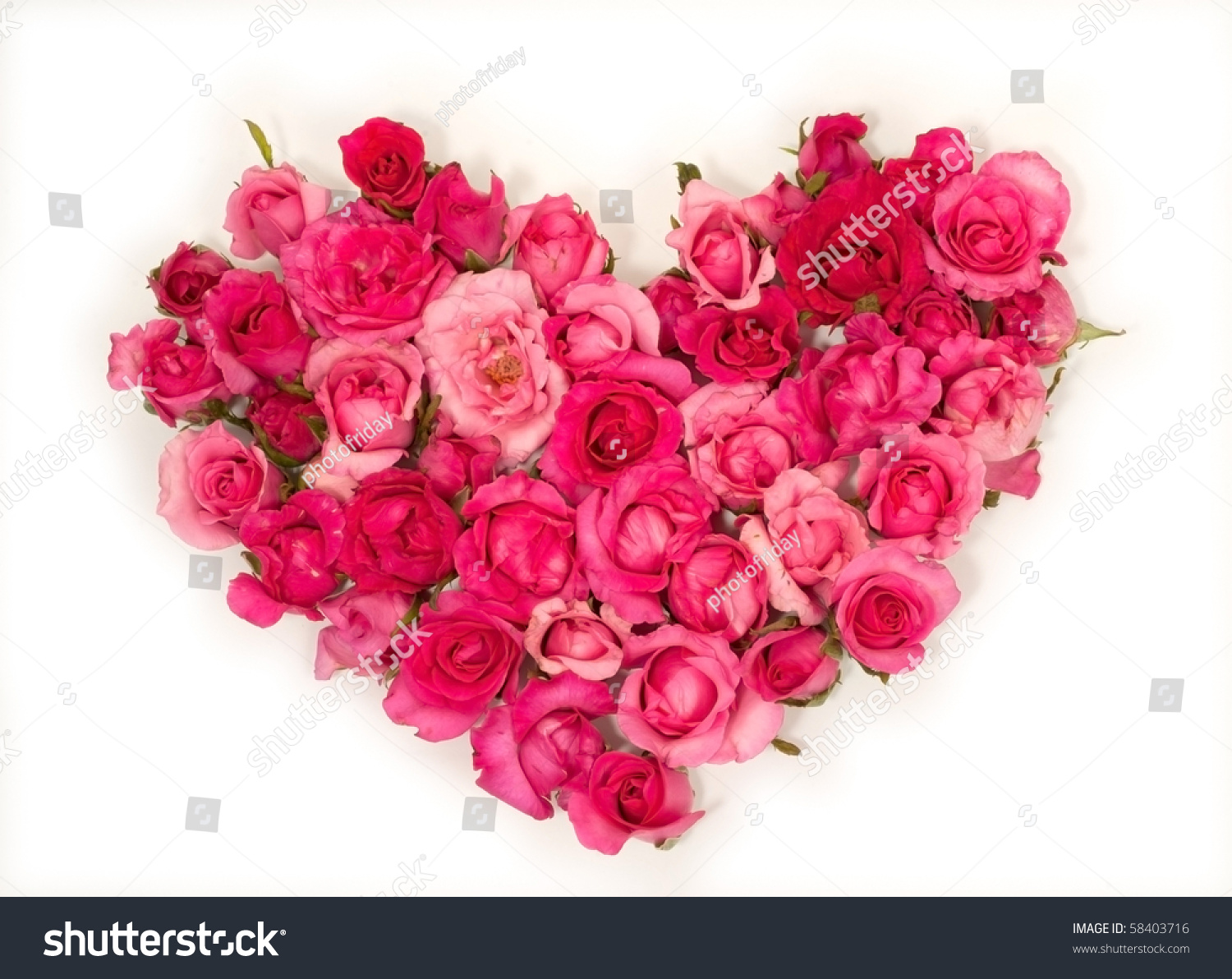 Pink Roses Heart Shape White Background Rose Stock Photo Edit Now
