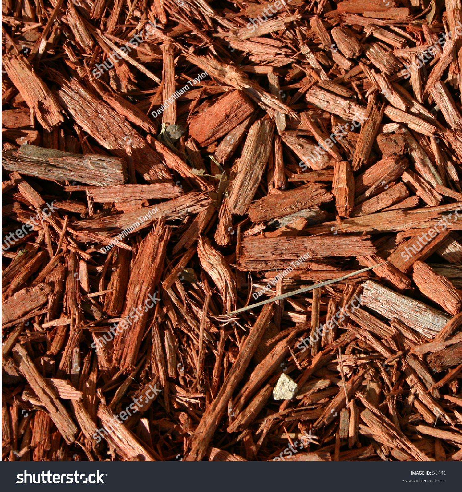 Redwood Bark Chips ~ Redwood mulch stock photo shutterstock