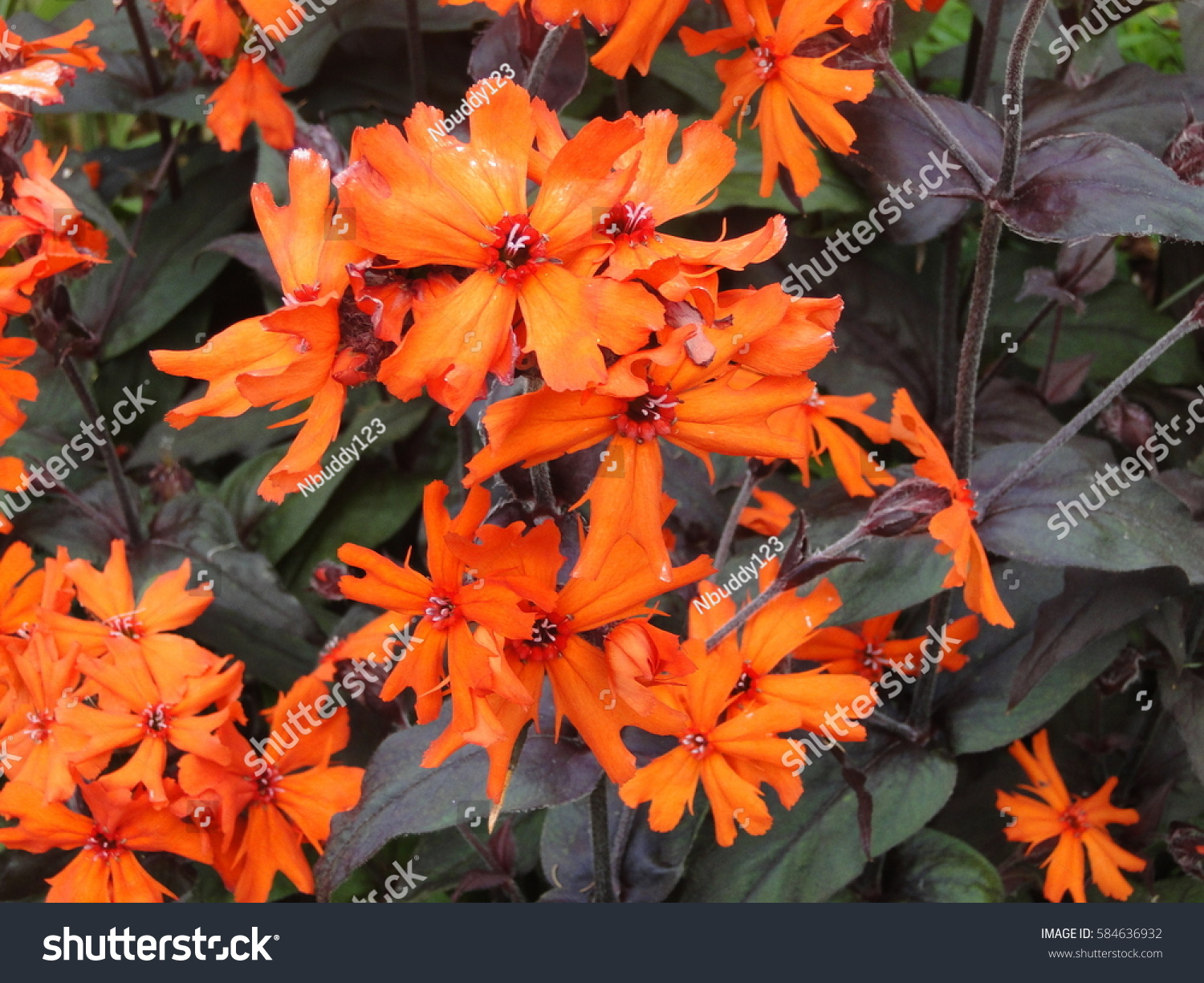 View beautiful flowers blooming national garden stock photo view of beautiful flowers blooming in a national garden under sunlight at the middle of summer izmirmasajfo Images