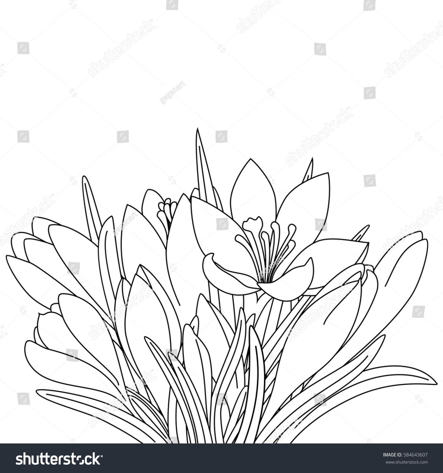 Spring flowers outline drawing crocuses coloring stock illustration spring flowers outline drawing of crocuses for coloring coloring page mightylinksfo