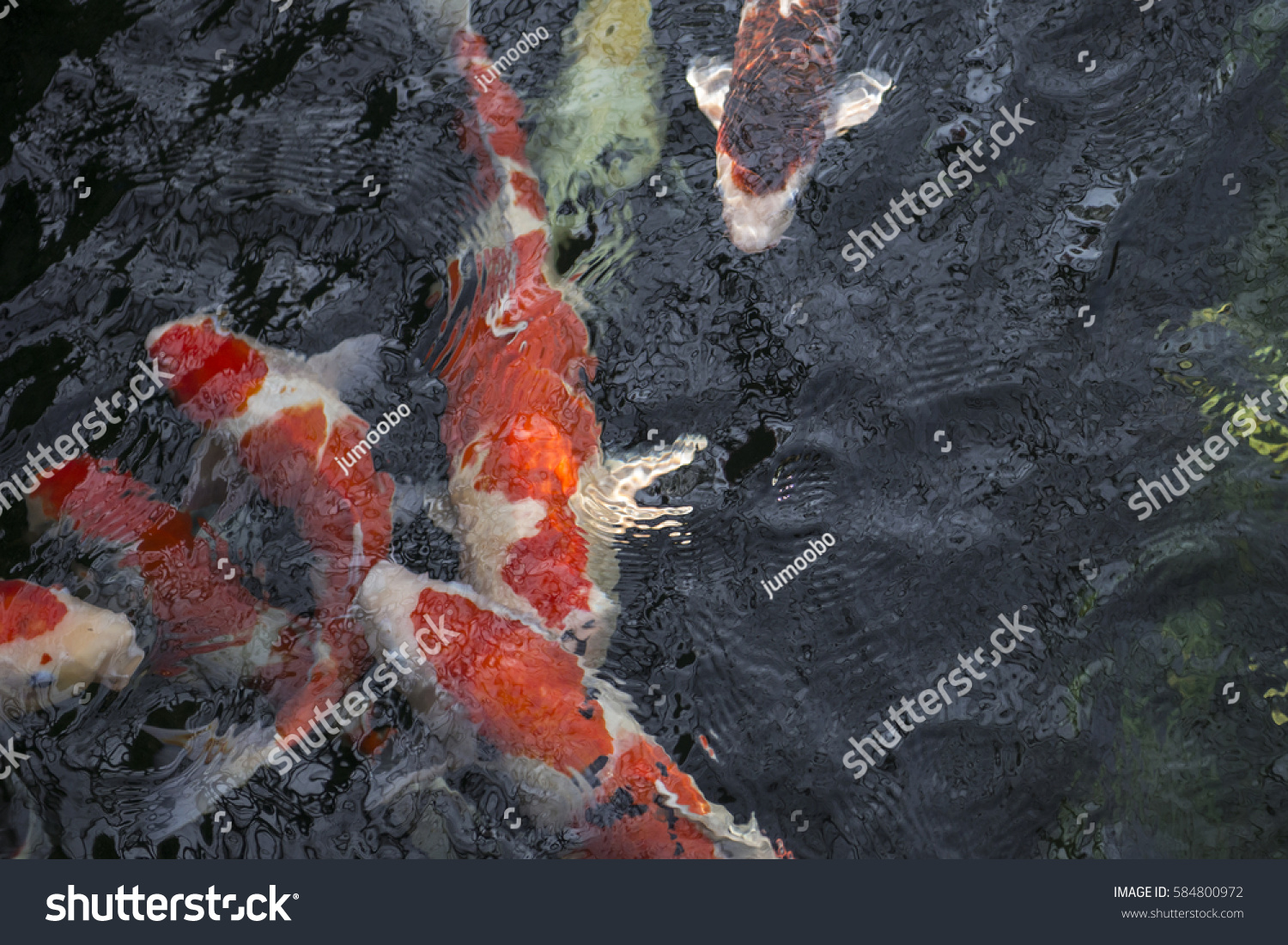Colorful koi fish pond japanese carp stock photo 584800972 for Colourful koi fish