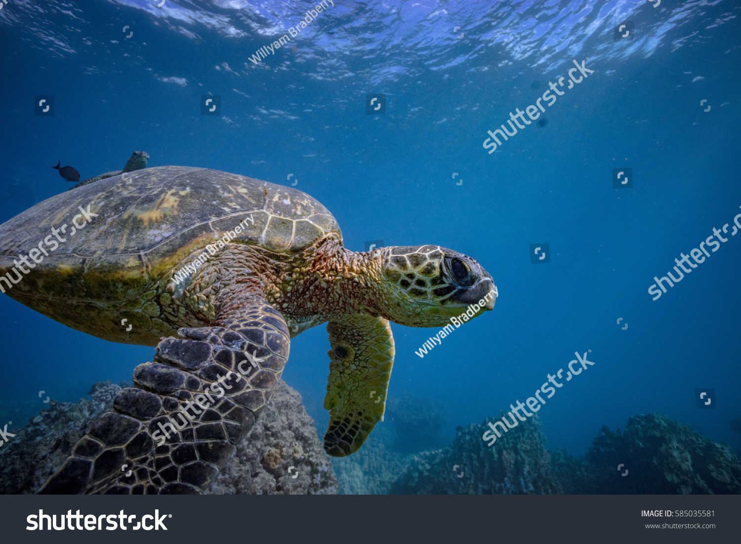 Pacific Ocean Underwater Animals Pacific Ocean Underwater Animals