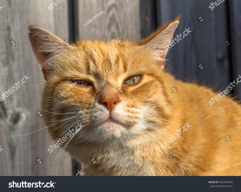 Portrait Funny Looking Cat Stock Shutterstock