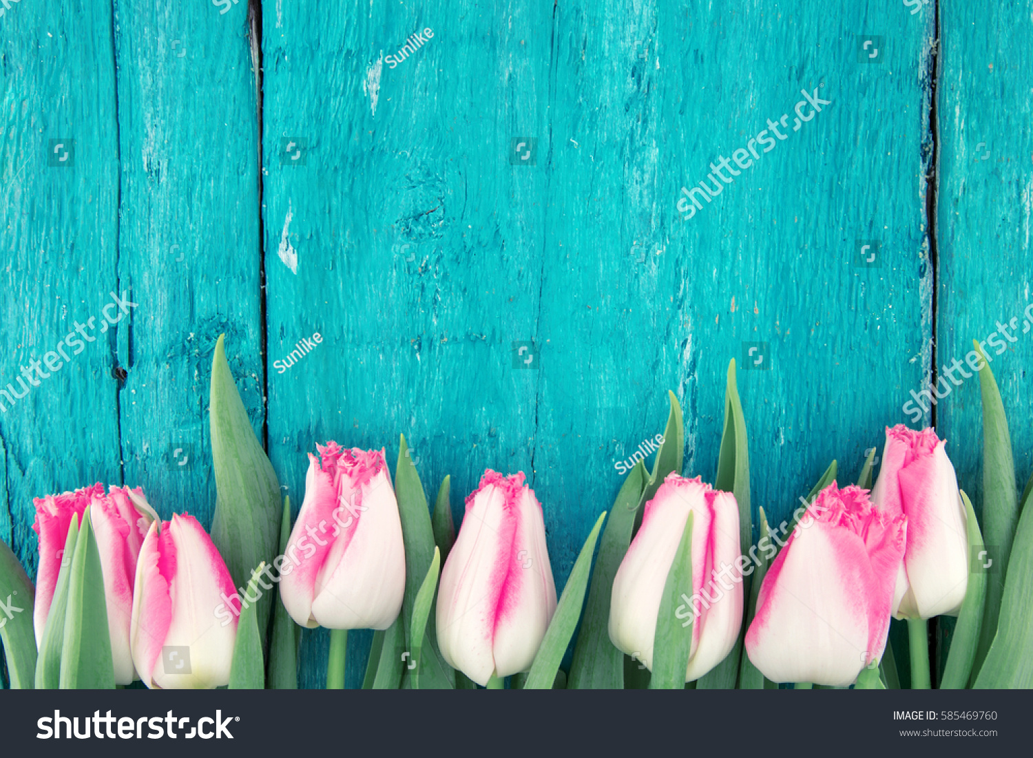 Frame of tulips on turquoise rustic wooden background. Spring flowers. Spring background. Greeting card for Valentine's Day, Woman's Day and Mother's Day. Top view. #585469760