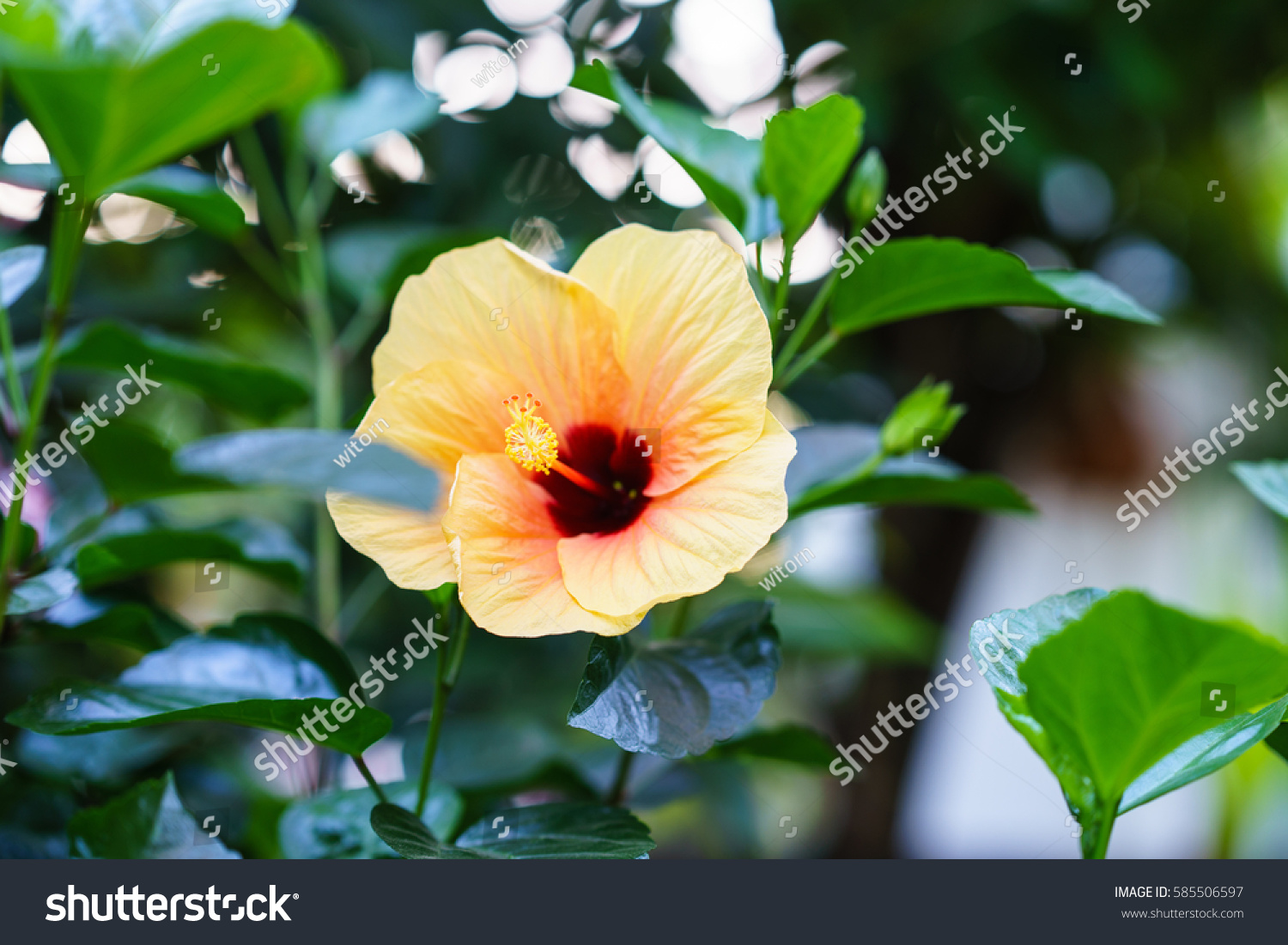 Paper Flower Hibiscus Stock Photo Edit Now 585506597 Shutterstock