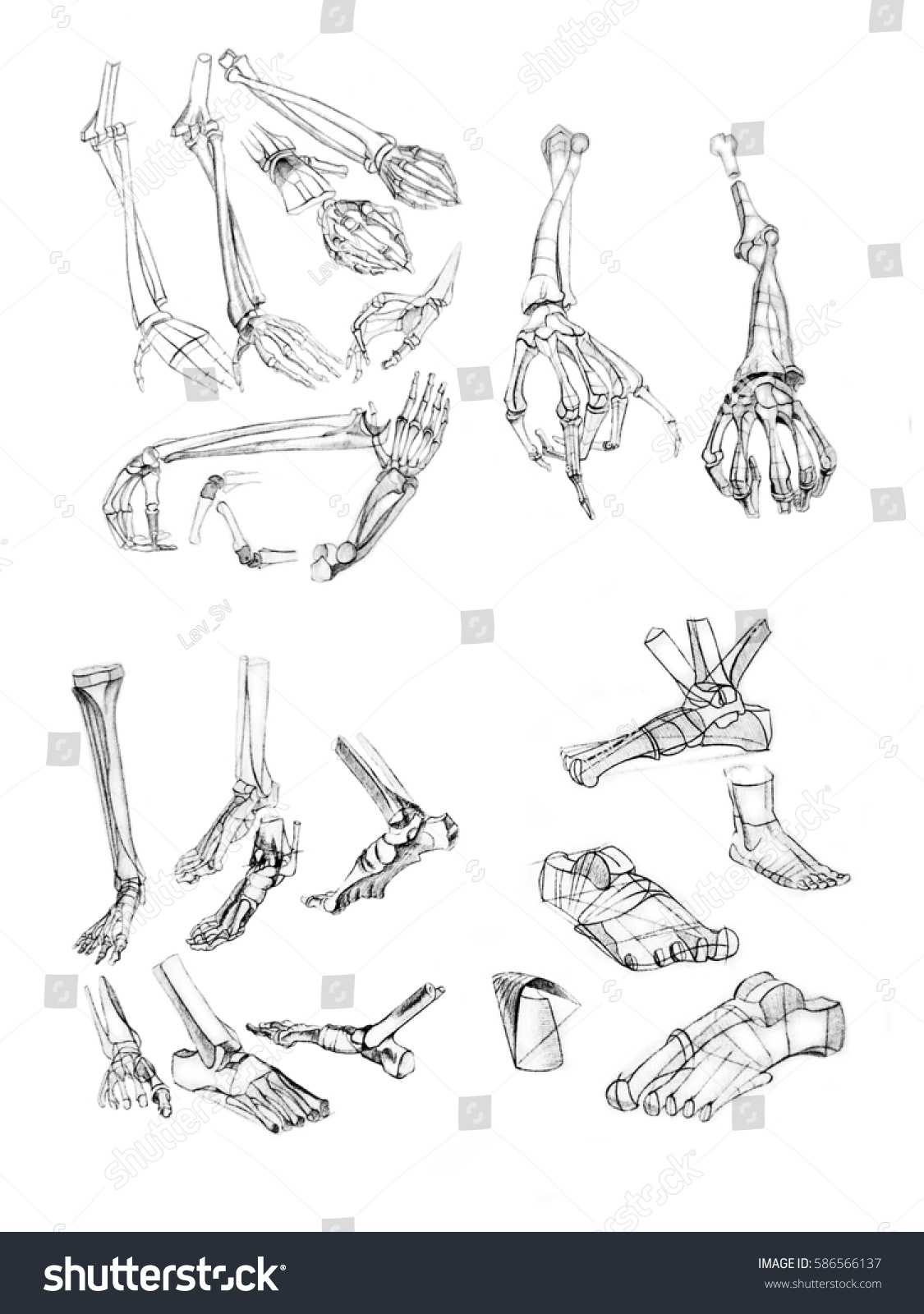 Sketch Human Hand Anatomy Pencil Stock Illustration 586566137 ...