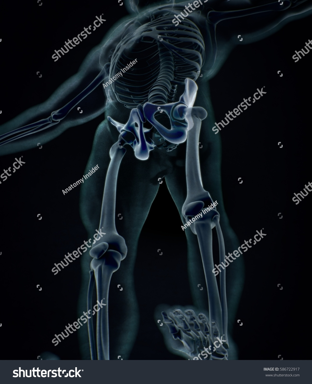 Ilium bone, hip bone or pelvis. Human anatomy, bone skeletal ...