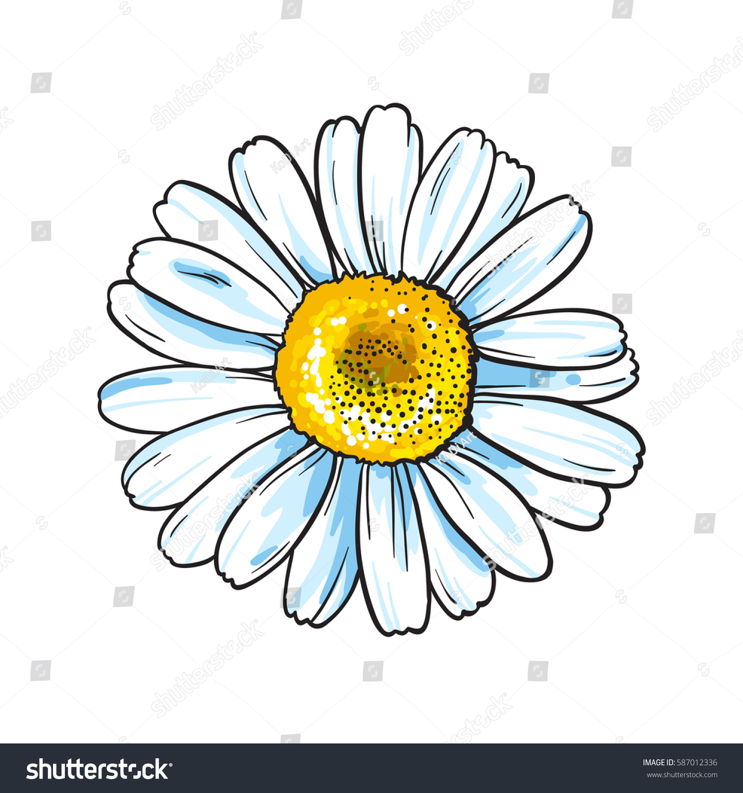 Vector White Flower Yellow Middle Isolated Stock Vector Royalty