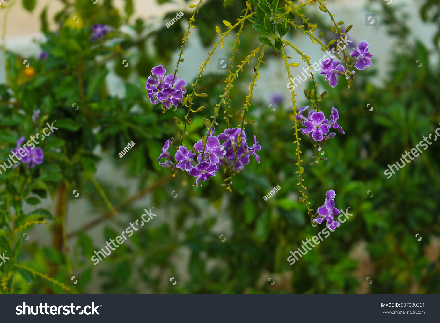 Small Purple Flowers Blooming Bouquet Break Stock Photo (Edit Now ...