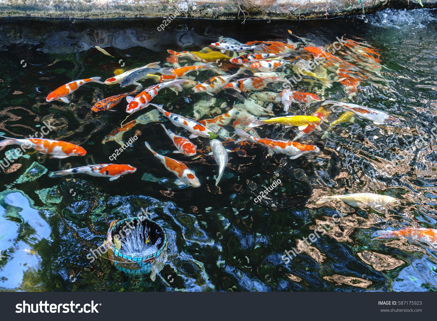 Beautiful koi fish swimming pondselect focus stock photo for Pool koi aquatics ltd
