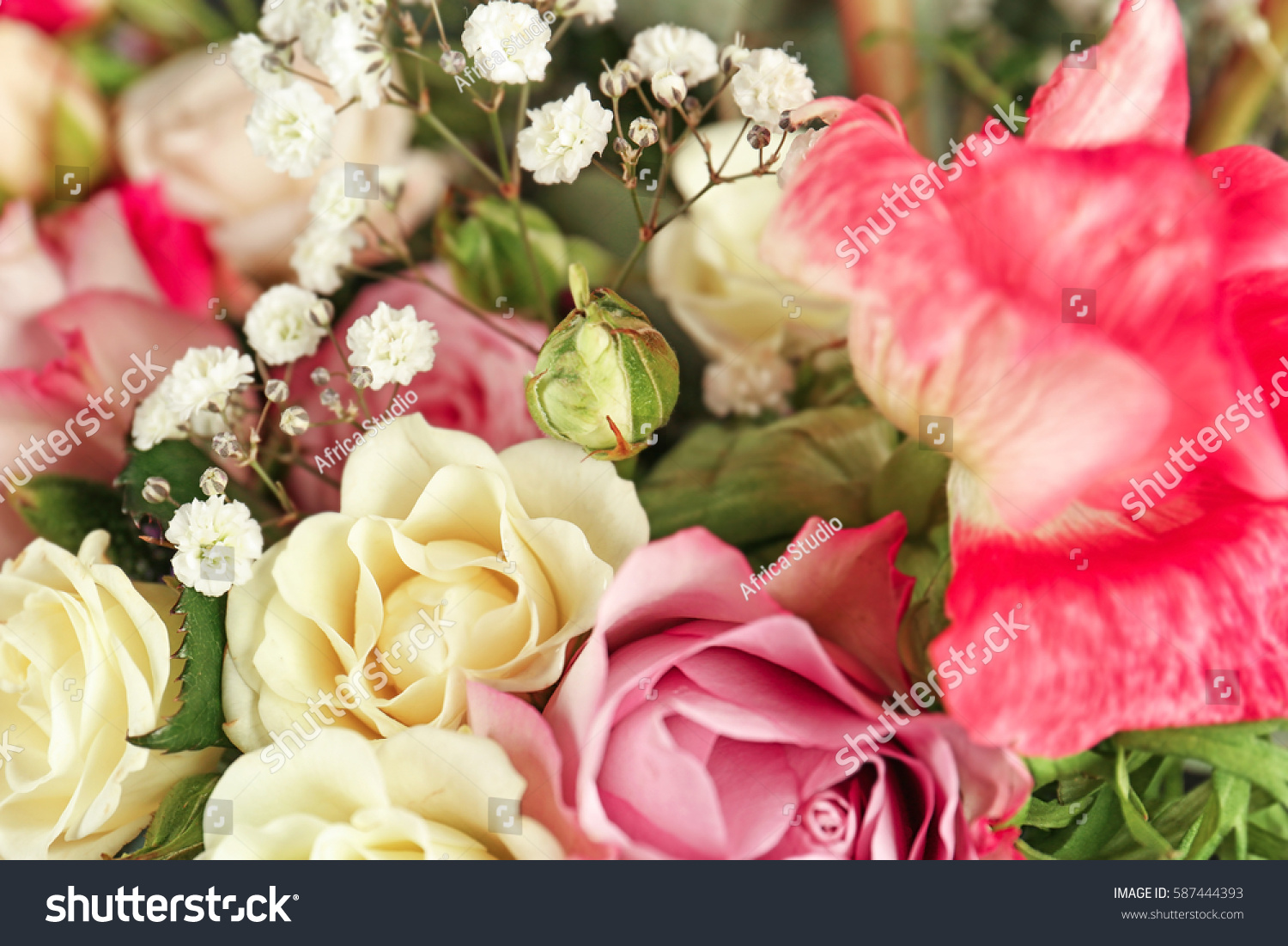Beautiful Fresh Flowers Background Stock Photo Royalty Free