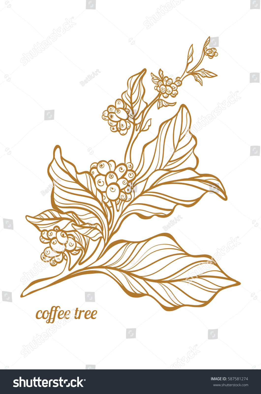 Branch Of Coffee Tree With Leaves And Natural Coffee Beans