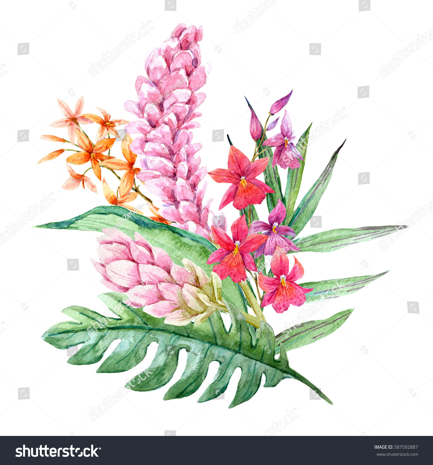 Watercolor Tropical Flower Bouquet Blooming Ginger Stock ...