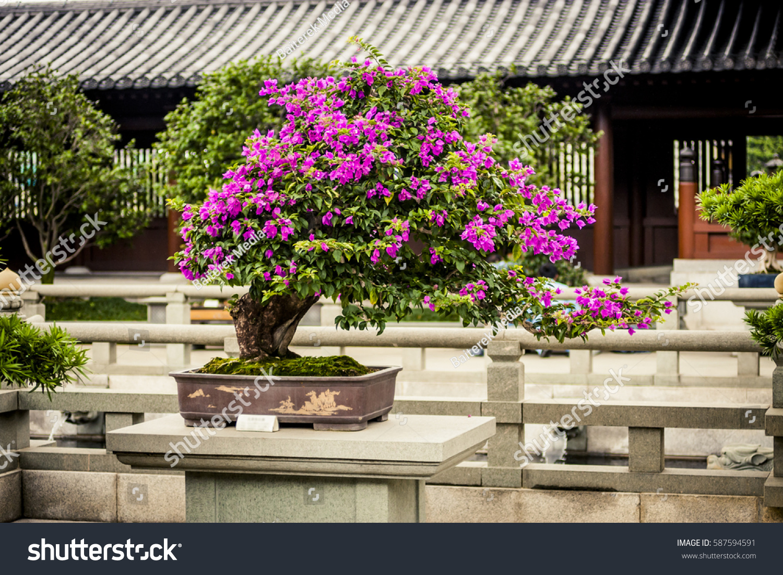 Bonsai Tree Pink Flowers Temple Stock Photo Edit Now 587594591