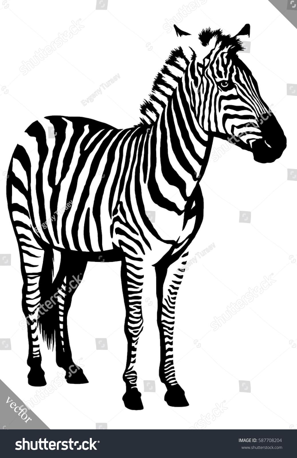 Black White Linear Paint Draw Zebra Stock Vector Royalty Free