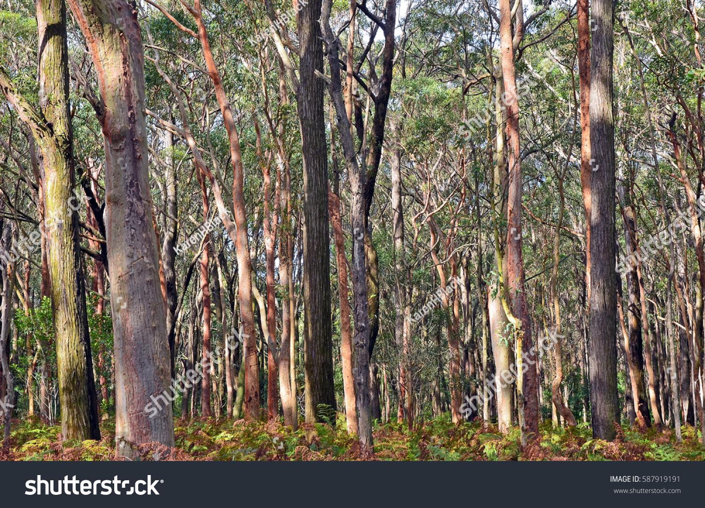 darkes forest nsw