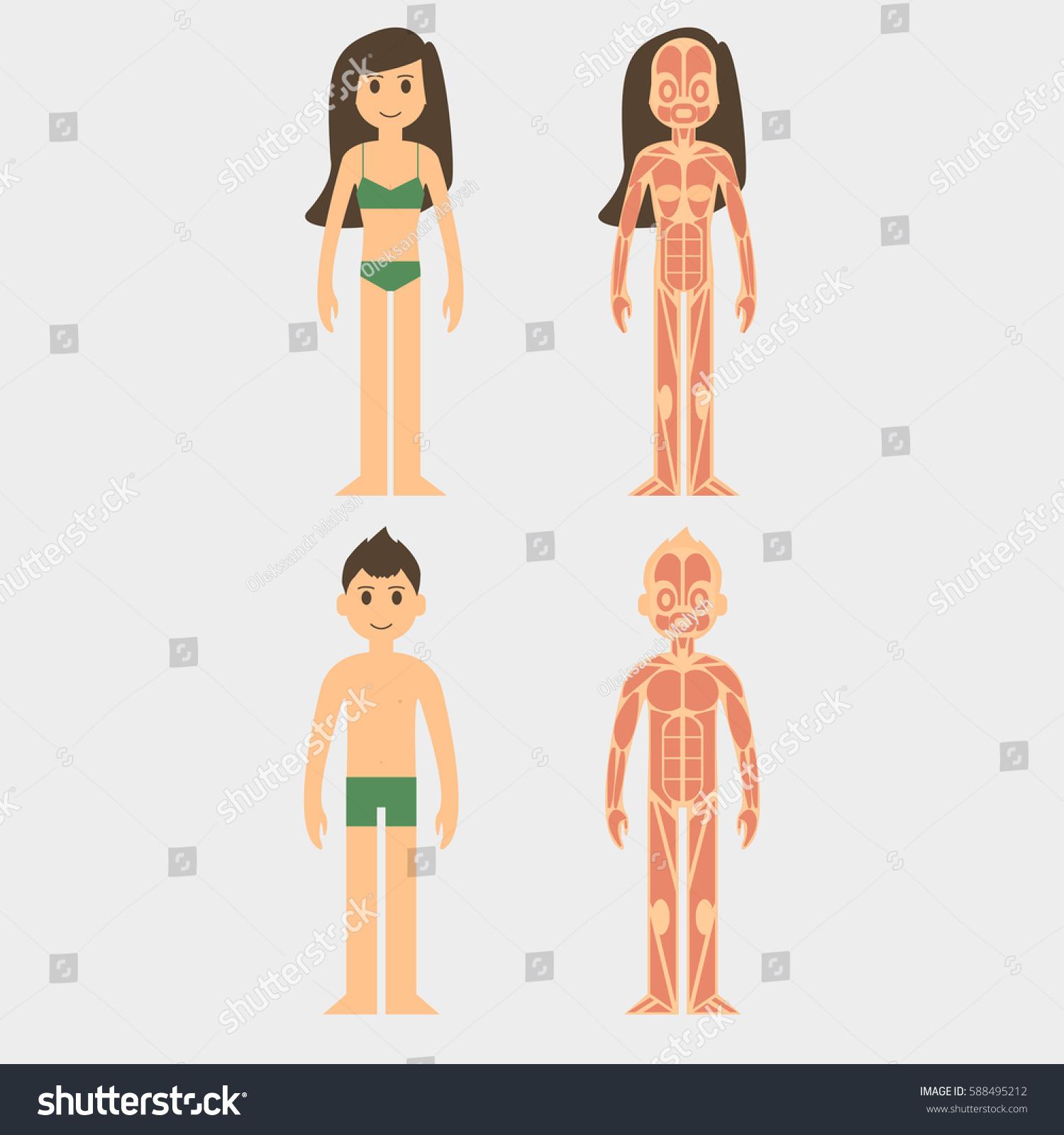 Stylized Male Female Body Anatomy Chart Stock Vector 588495212 ...
