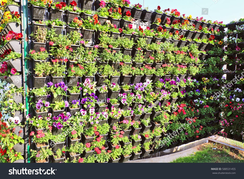 Beautiful flowers blooming flowerpots look like stock photo royalty beautiful flowers blooming in flowerpots look like flower bed attracting human as well as izmirmasajfo