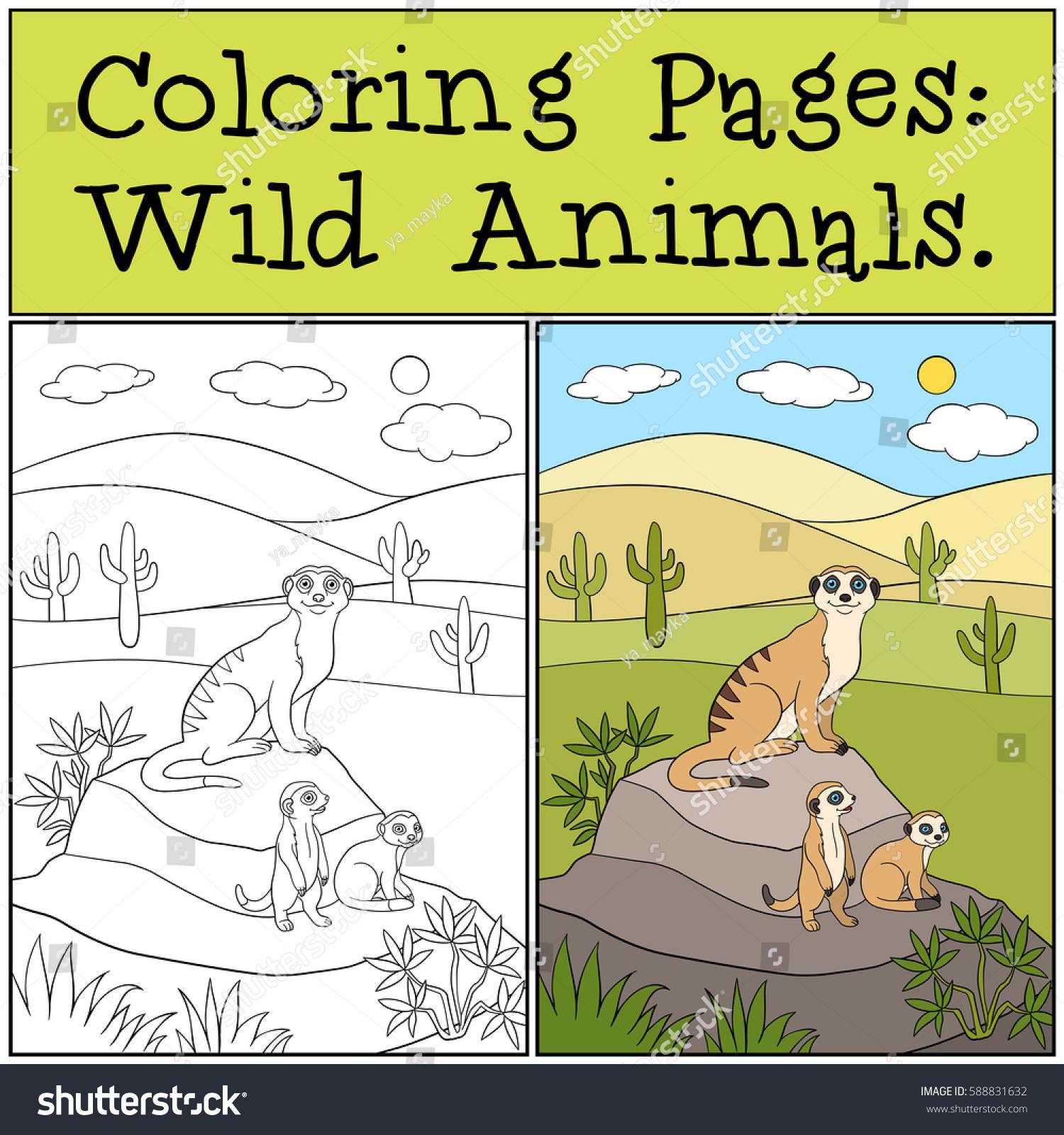 Coloring Pages Wild Animals Mother Meerkat Stock Vector