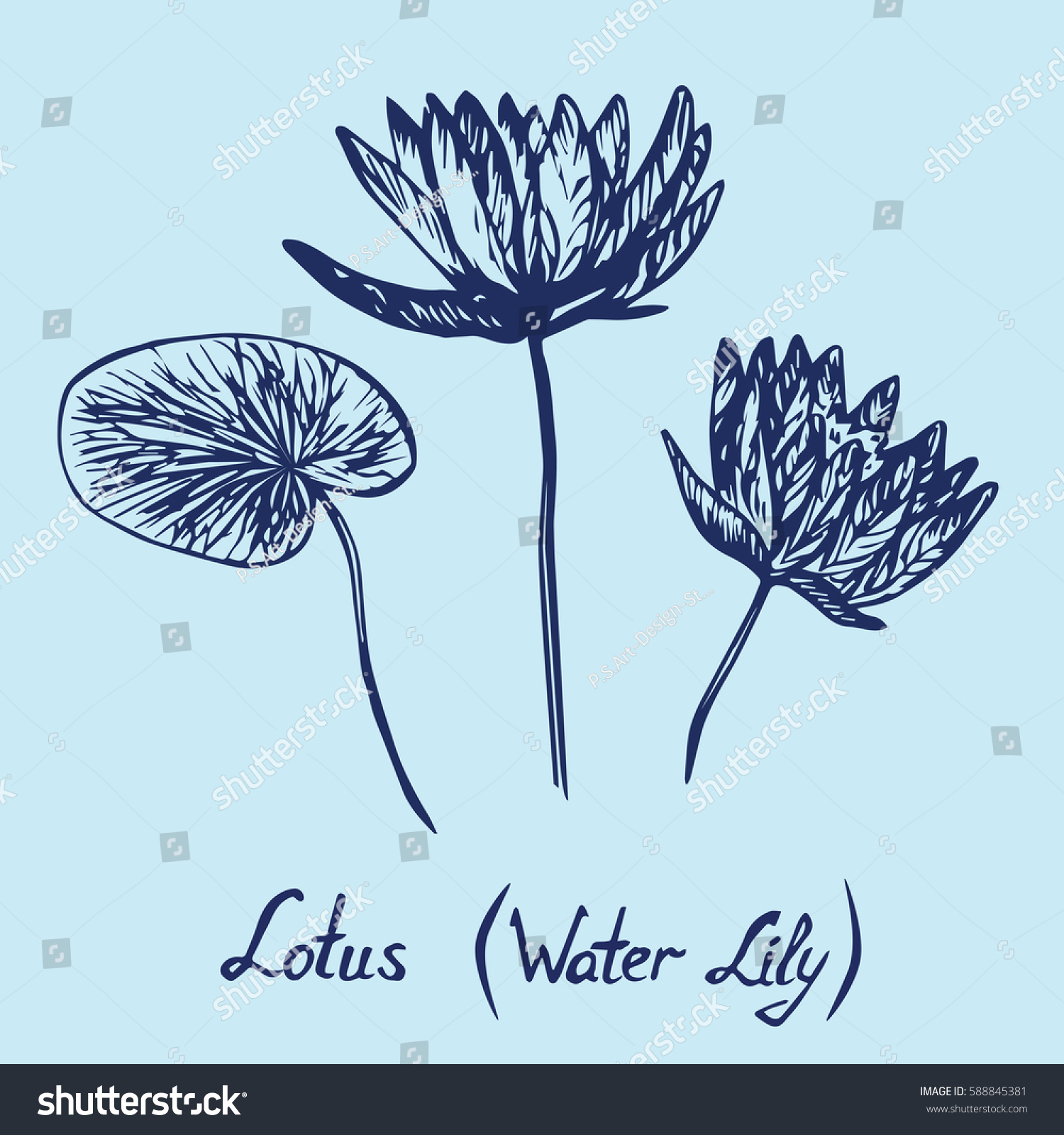 Lotus water lily flowers leaves set stock vector royalty free lotus water lily flowers and leaves set with inscription hand drawn doodle izmirmasajfo