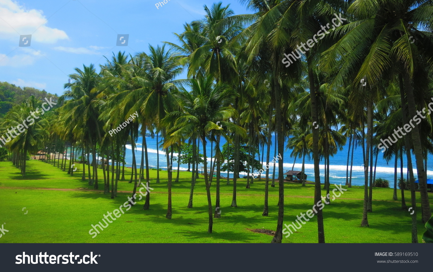 Beautiful Coconut Palm Trees On Colorful Stock Photo (Royalty Free ...