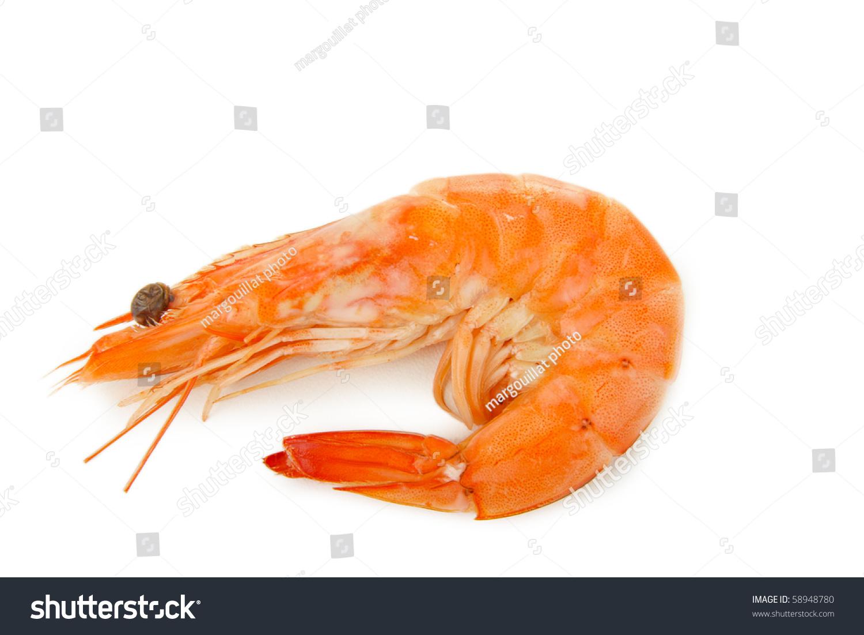 Single Shrimp Stock Photo 58948780 : Shutterstock