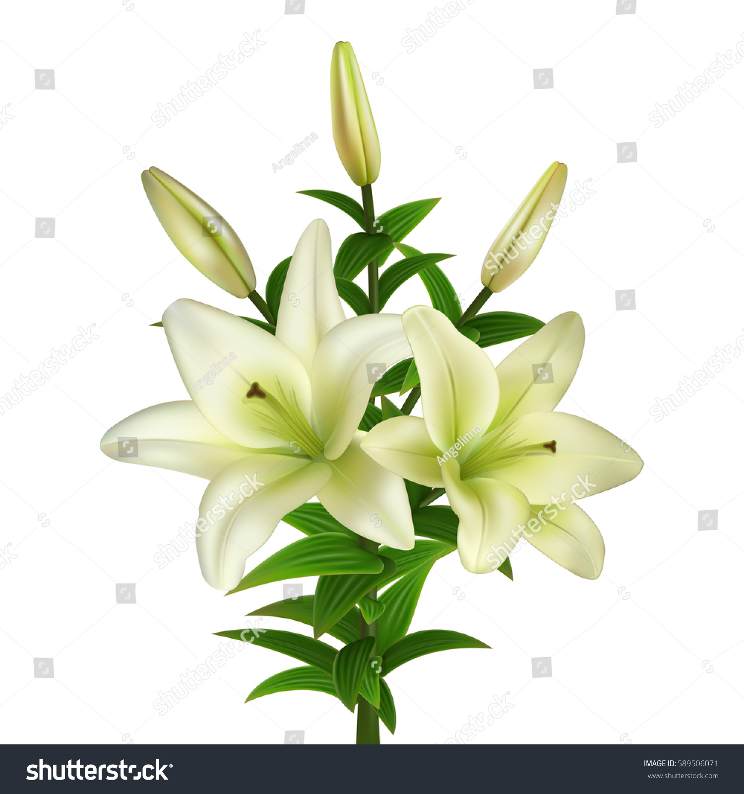 Illustration Of Bouquet From White Lily Flowers Isolated Ez Canvas