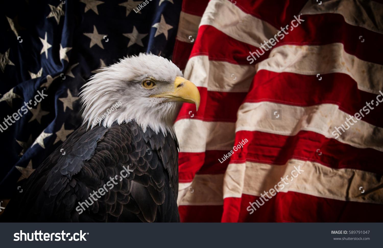 American bald eagle symbol america with stock photo 589791047 american bald eagle symbol of america with flag united states of america patriotic buycottarizona Choice Image