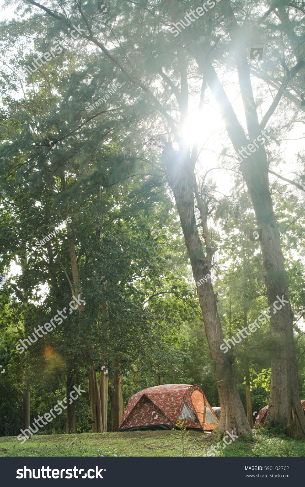 Tent In The Woods : Tent camping woods stock photo shutterstock