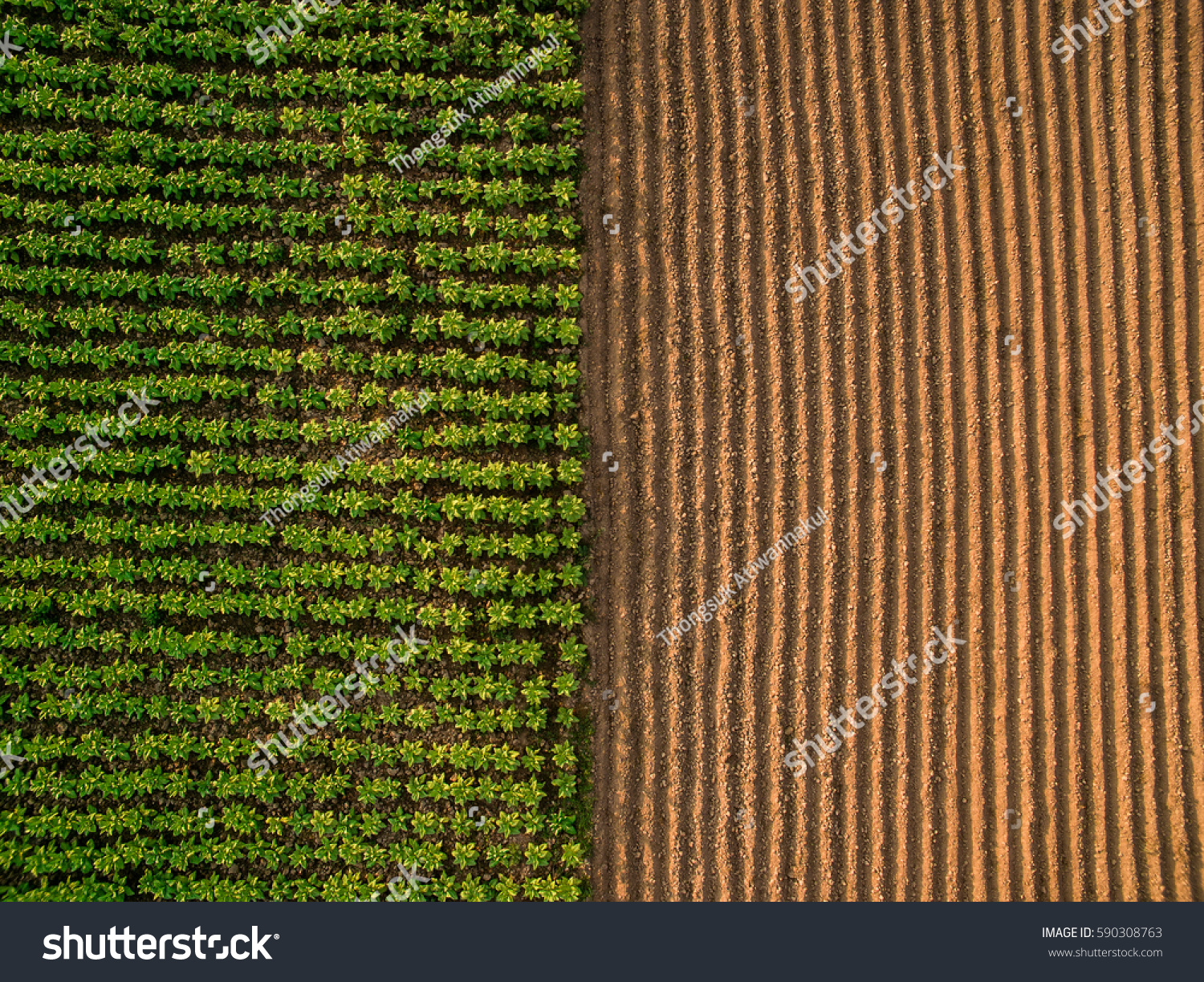 Aerial view ; Rows of soil before planting.Furrows row pattern in a plowed field prepared for planting crops in spring.Horizontal view in perspective.