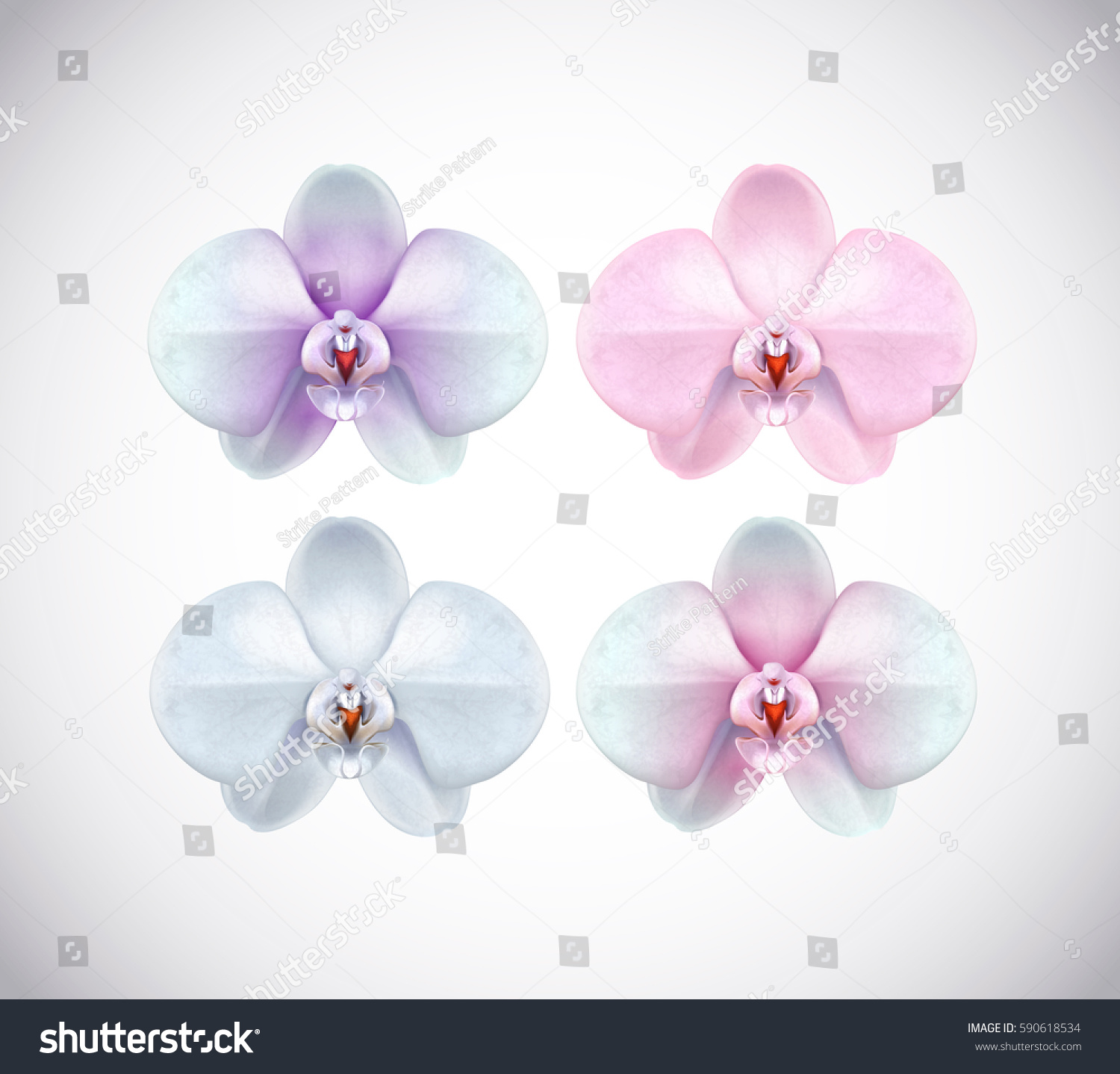 White Orchid Flower With Pur Center Jpg