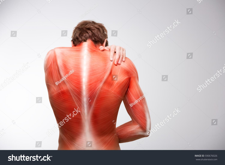 Back musculature anatomy