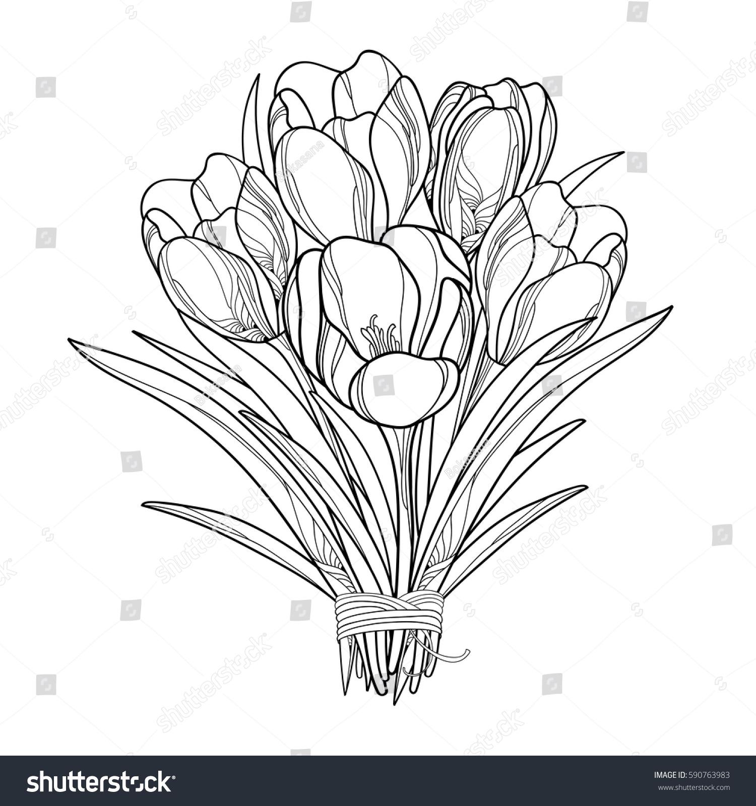 Vector Bouquet Outline Crocus Saffron Flowers Stock Vector