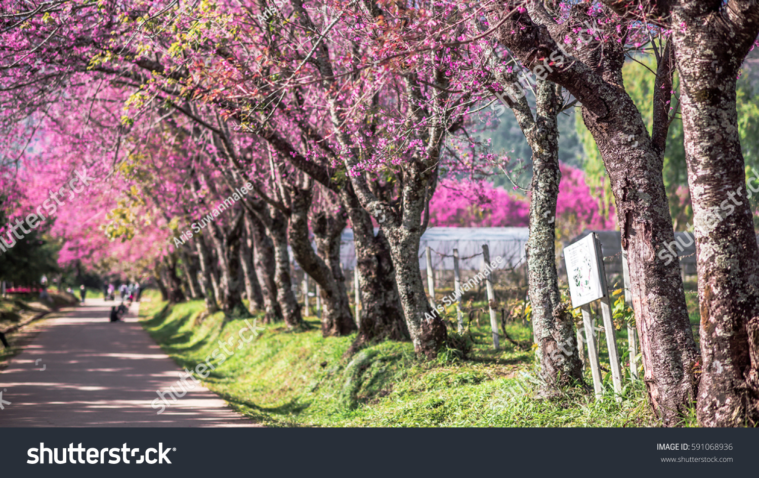 Gorgeous Pink Flowers Scenery Background Stock Photo Edit Now