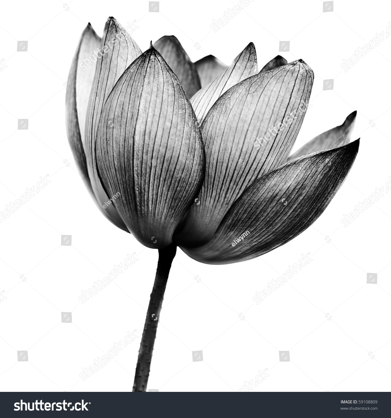 Flower Power Stock Photos Royalty Free Images And Vectors