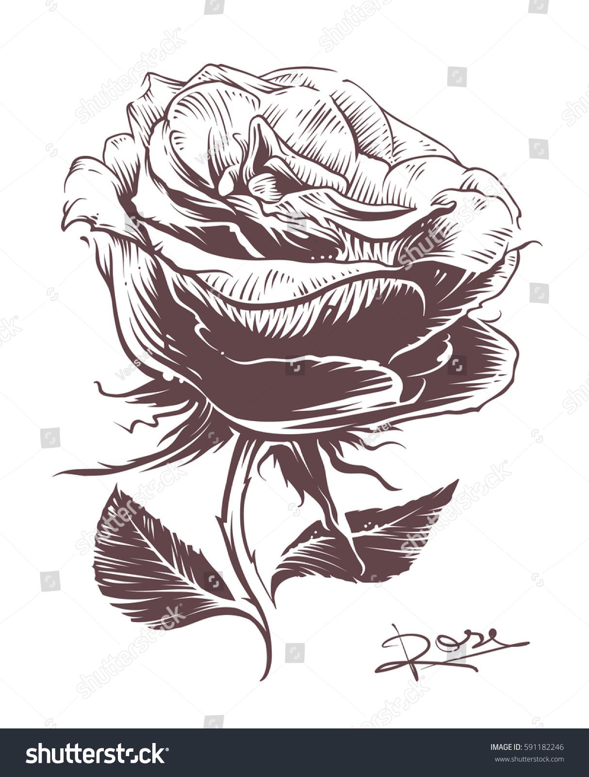 Line Art Flower Illustration : Vintage hand drawn rose style stock vector