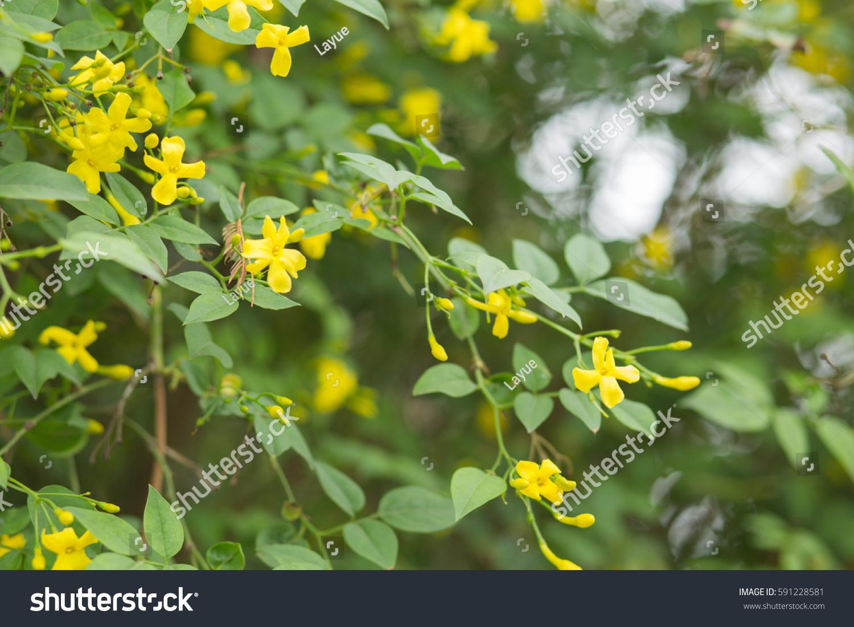 Yellow Mountain Flowers Ez Canvas