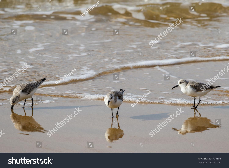 The Sandpiper Laguna Beach