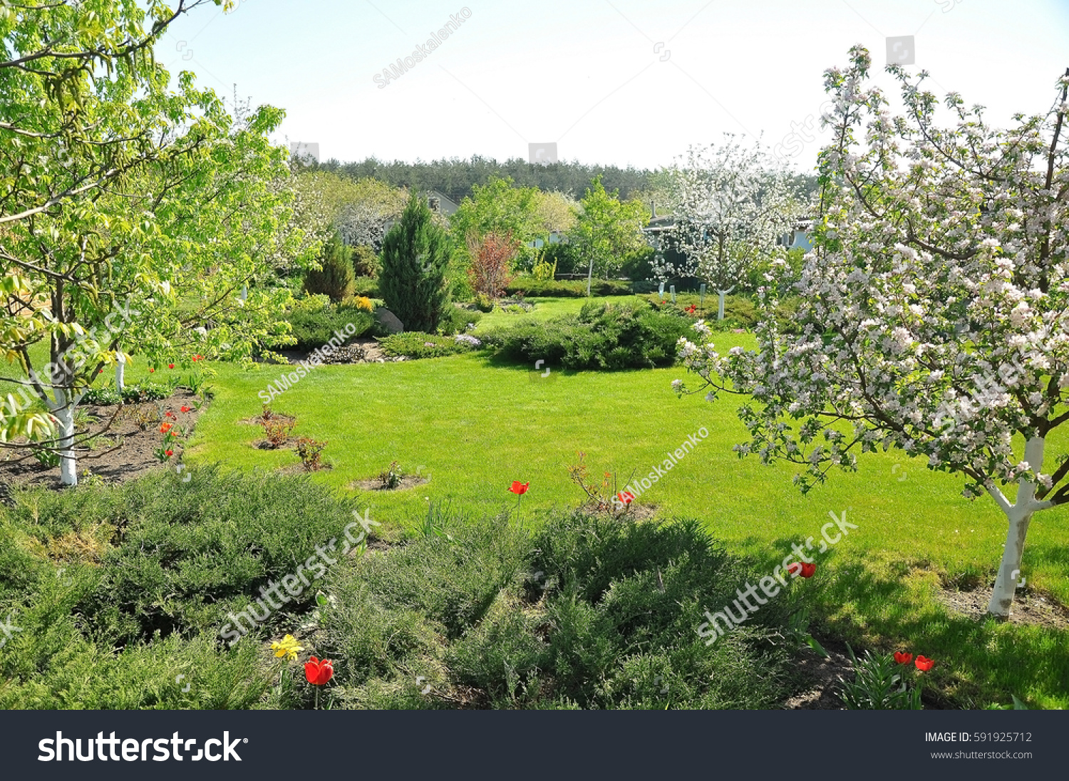 Beautiful Home Lawn Spring Sunny Day Stock Photo Edit Now 591925712
