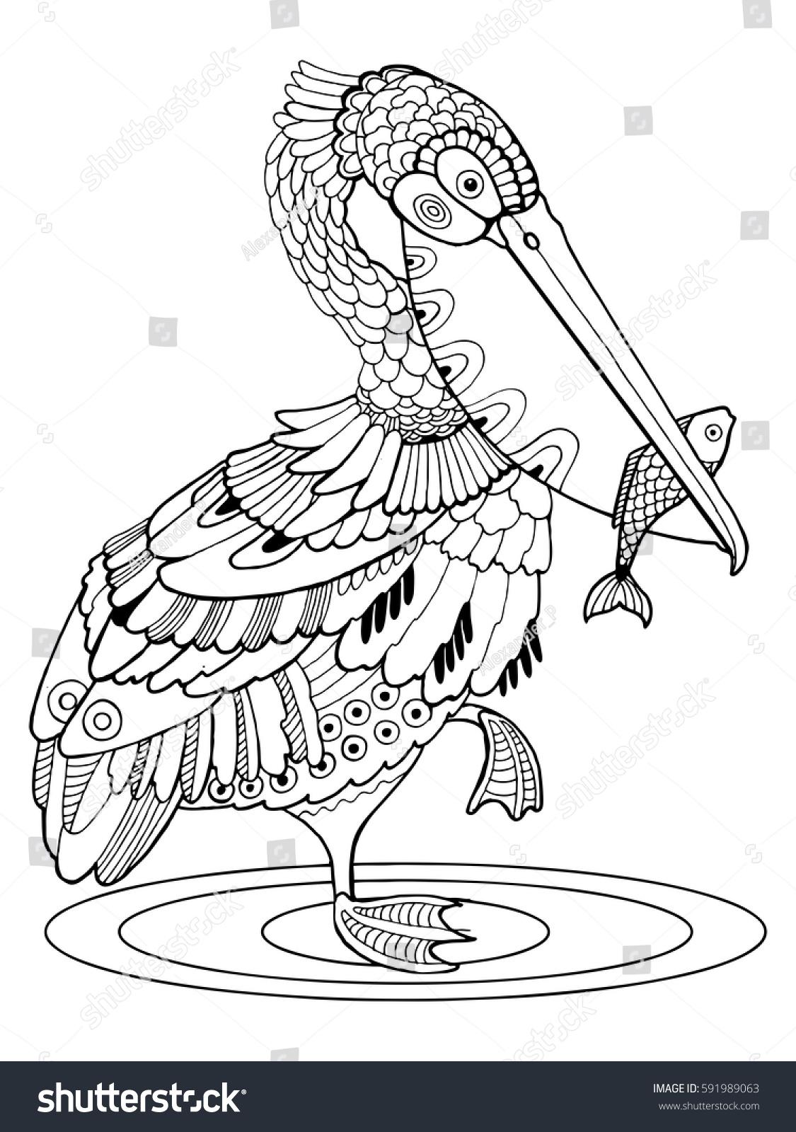 Pelican Bird Coloring Book Vector Illustration Stock Vector Royalty