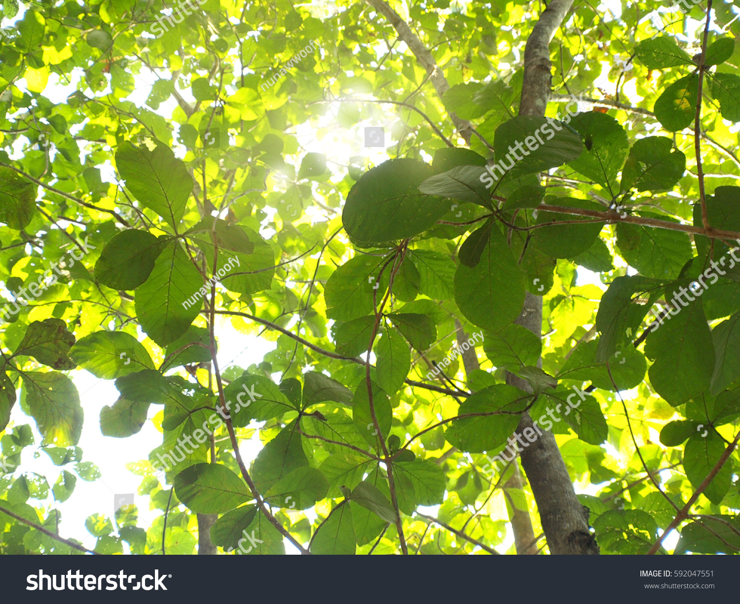 Spring Green Leaves Background Deep Forest Stock Photo ...