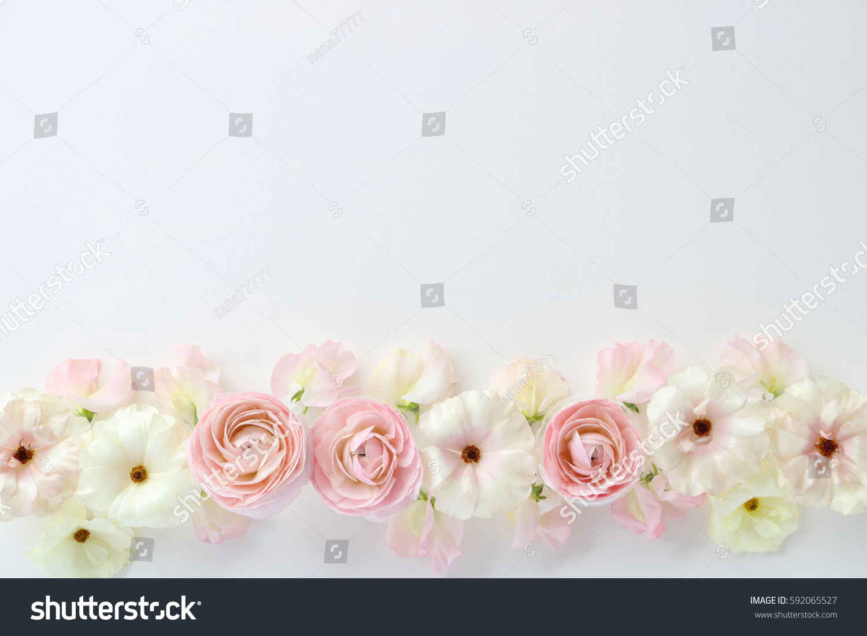 Beautiful Pink White Ranunculus Flowers Sweetpea Stock Photo