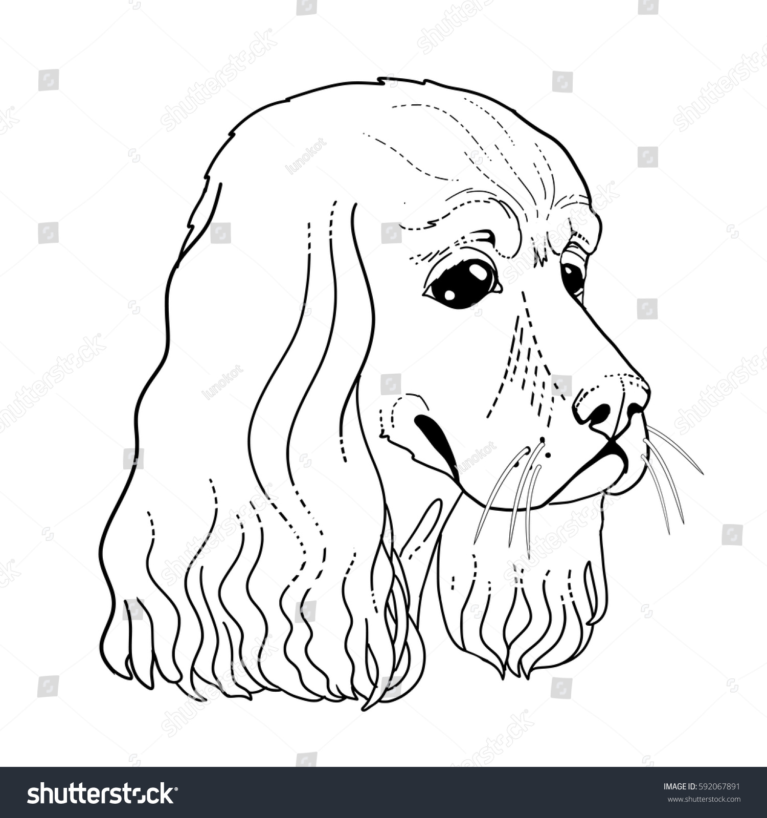 Dog Head Line Draw Coloring Book Page With Spaniel Face Vector Illustration