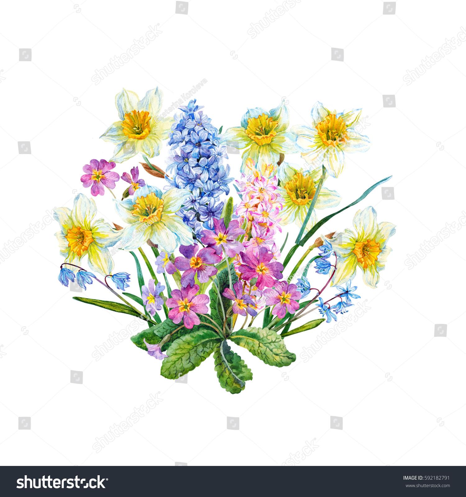 Bouquet Spring Flowers Primrose Watercolor Stock Illustration ...