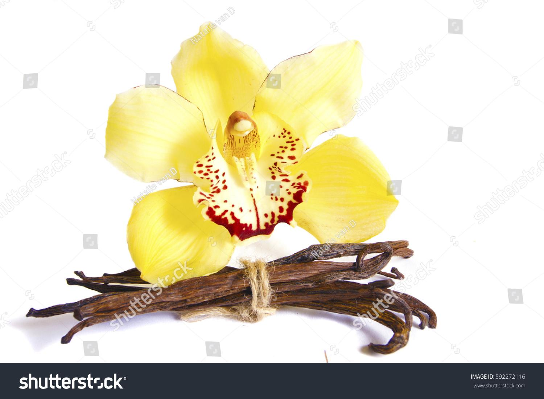 Macro Close Wild Yellow Orchid Flower Stock Photo Edit Now