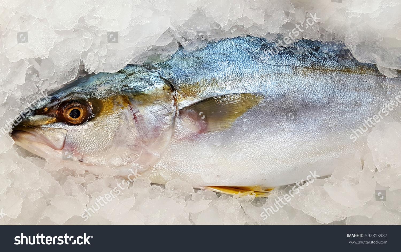Frozen Fish Fresh Market Stock Photo 592313987 Shutterstock
