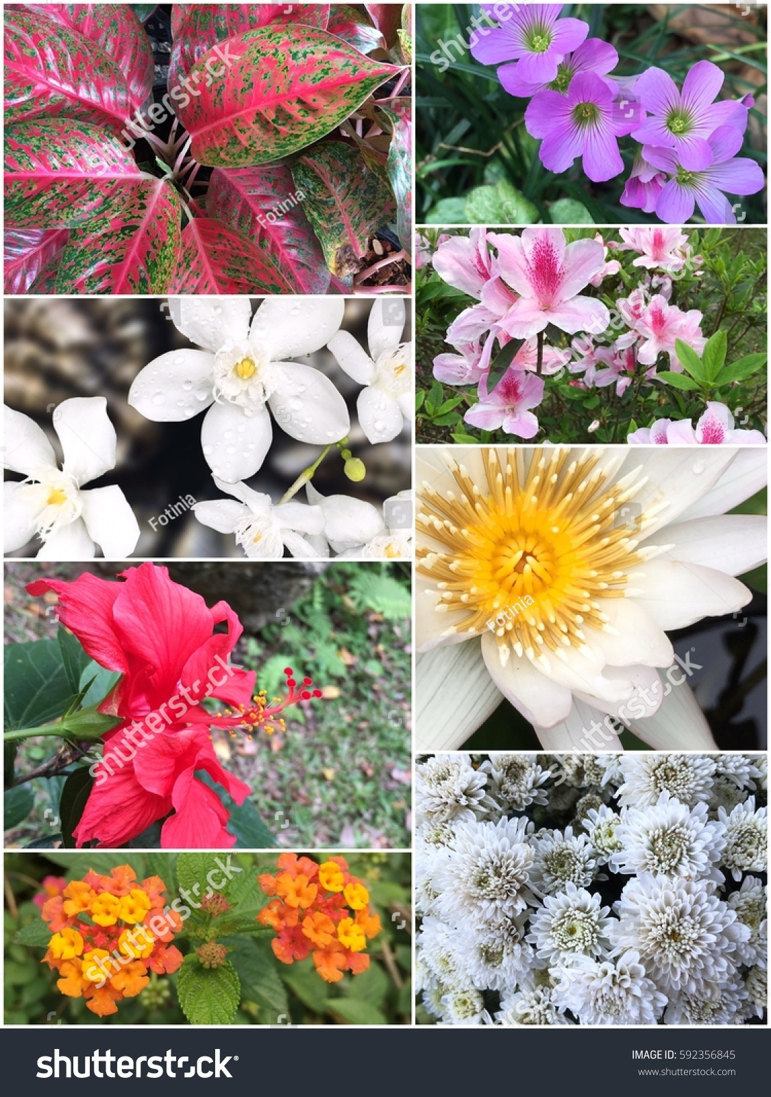 Collage Beautiful Variety Colorful Flowers Plants Stock Photo Edit