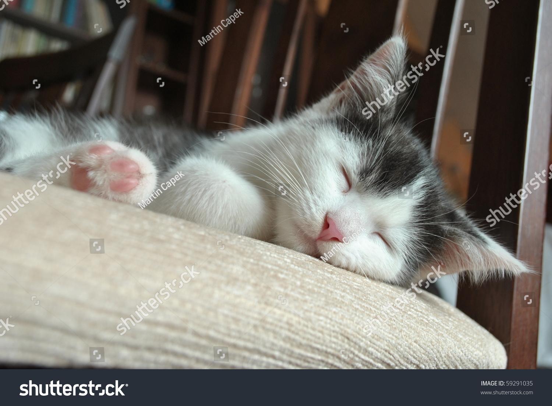 Cute Kitten Sleeping Chair Stock Shutterstock