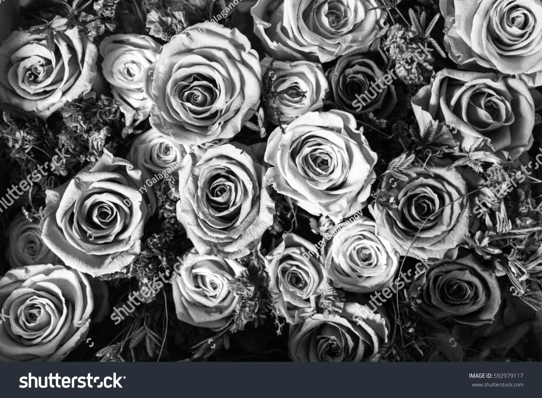 Black White Background Flowers Roses Stock Photo Royalty Free