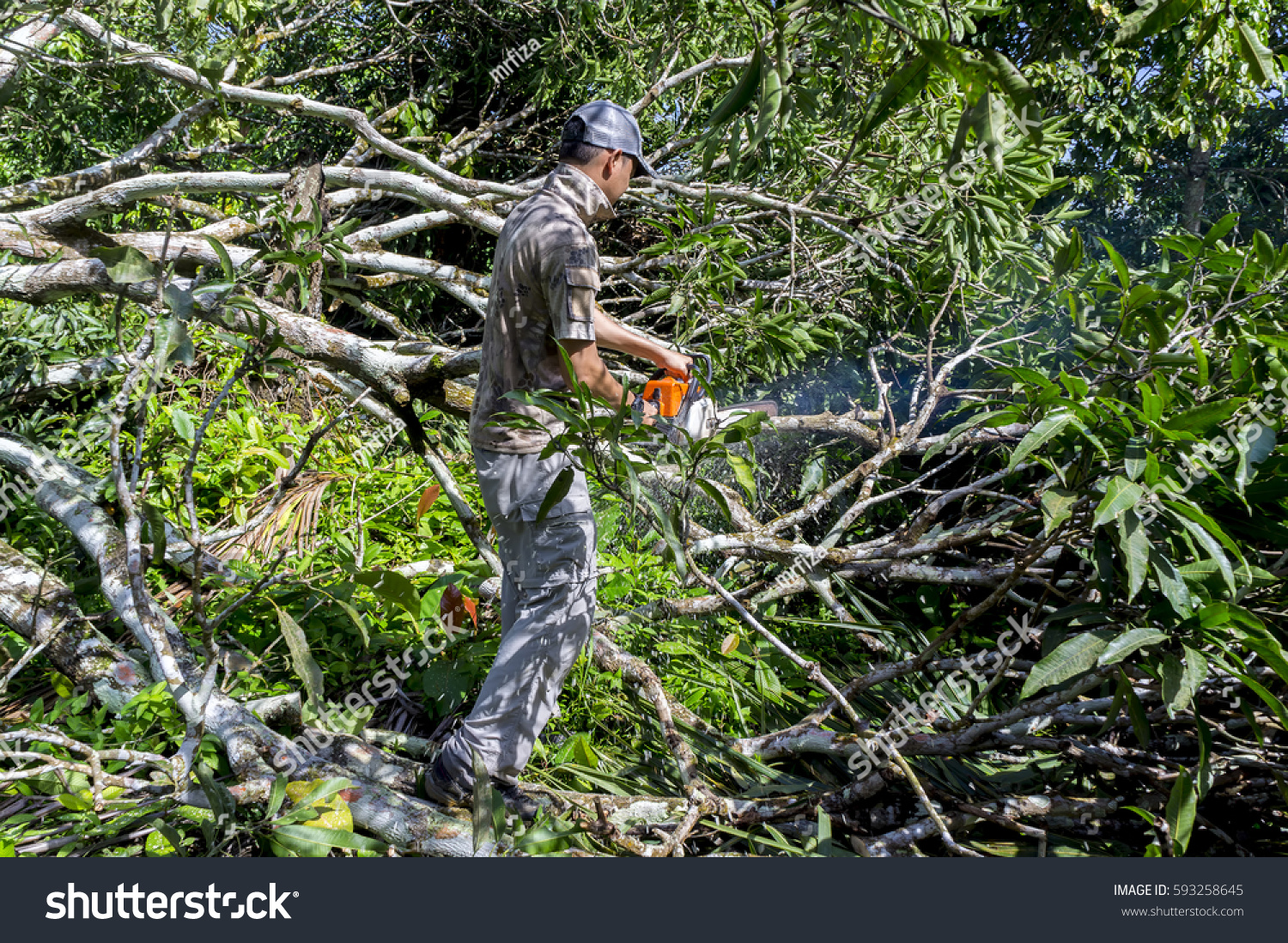 Tractor Man On Cutting Trees : Man cutting trees using electrical chainsaw stock photo